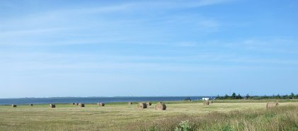 Agriculture isn't a big industry for the islands, but the farms you spot are very scenic.