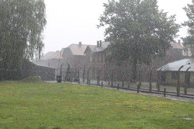 Auschwitz_rain