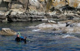 BC TRIP SWIM SEALS 2002