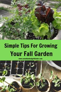 Fall Garden Growing Tips