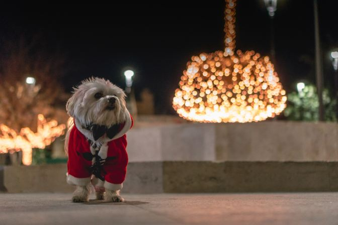 a dog is not just a Christmas gift