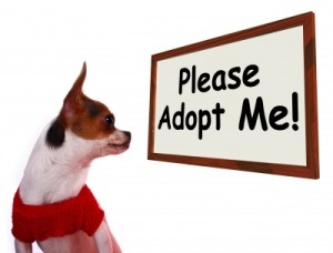 Is the humane society the only place to adopt a pet?