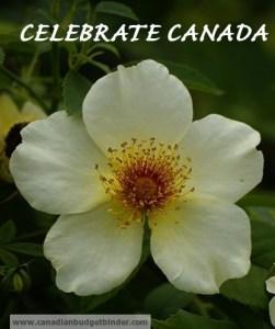Celebrate Canada wm