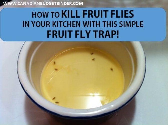 fruit flies recipe