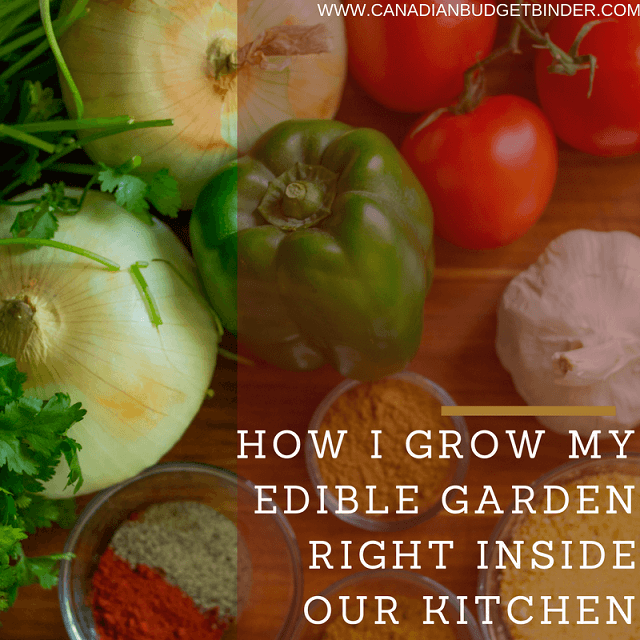how i grow my edible garden right inside our kitchen  the grocery game challenge 2016  1 nov 7