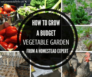 How to grow a budget vegetable garden from a homestead expert