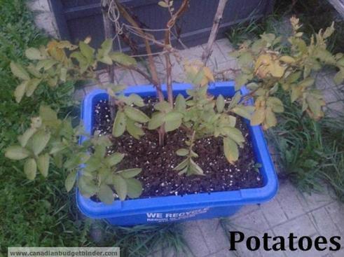 Organic-potatoes-recycle-bin