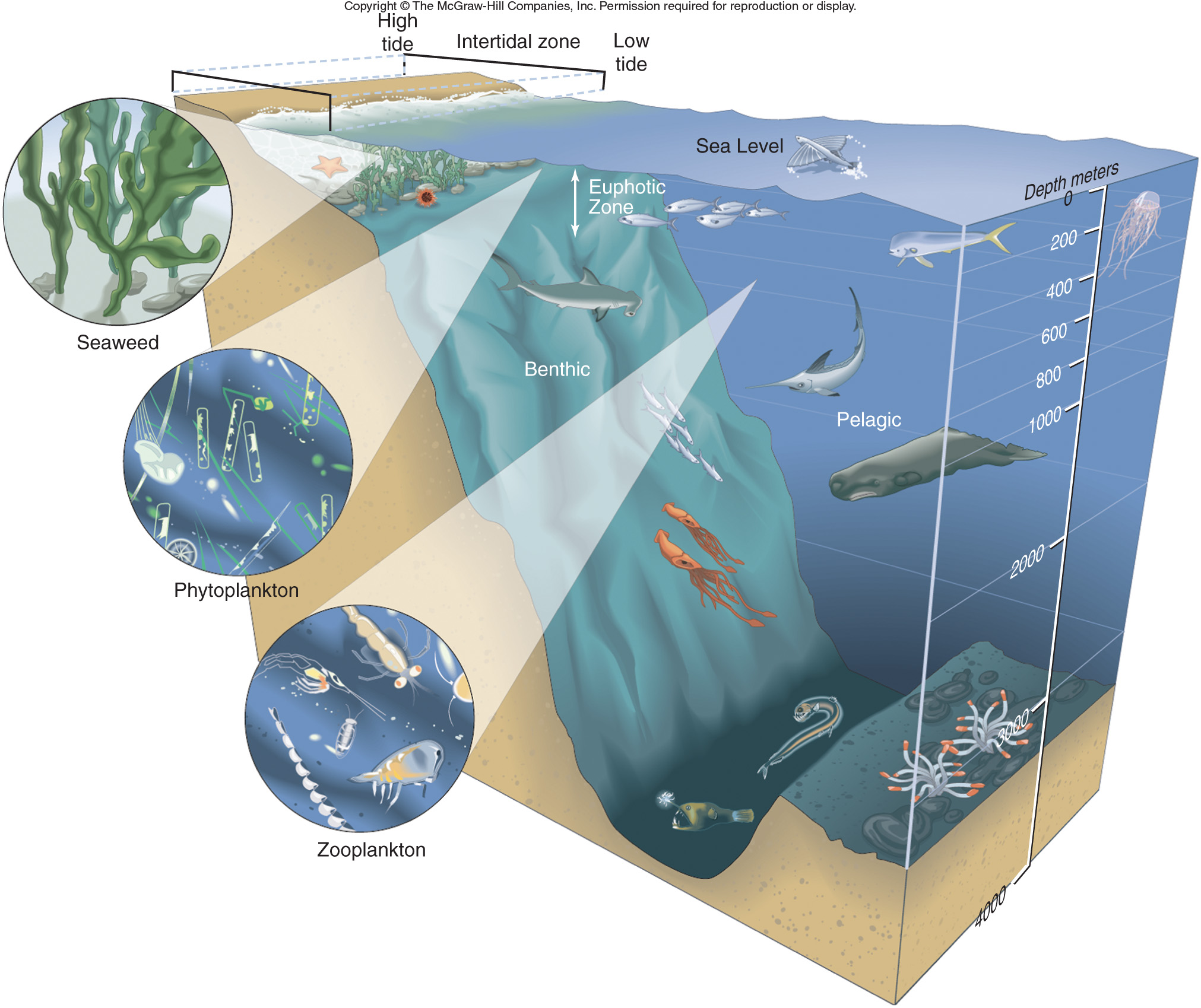 Adaptation In The Ocean Canadiancatfish