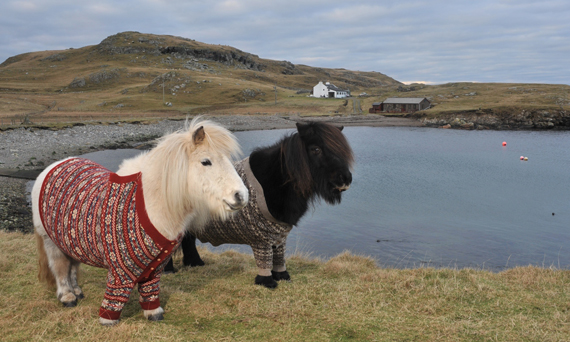 Fiva and Vitamin in their new jumpers.