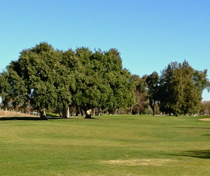 The 3 cork trees guarding the 11th green, I got to meet tree number 2.