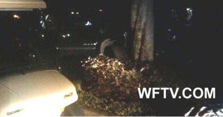 A TV shot of Woods' crash SUV
