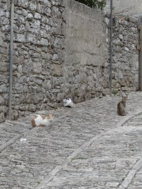 Cats in Erice, Sicily. Photo: CanadianKate