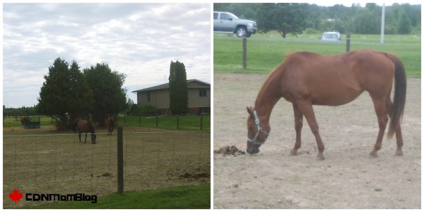 RBF Horses