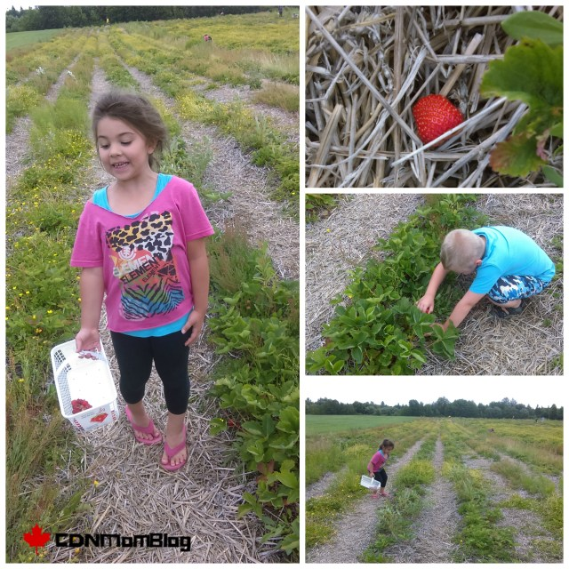 Ruby Berry Farm