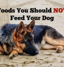 14 Foods You Should NOT Feed Your Dog