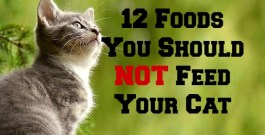 12 Foods You Should NOT Feed Your Cat