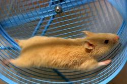 [Imagem: hamster.jpg?fit=250%2C167]