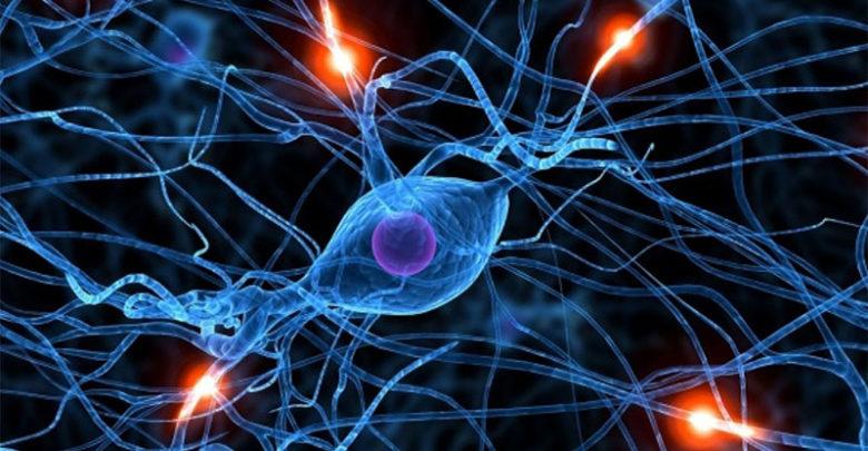 """Científicos de la UGR relacionan la """"poda"""" de conexiones neuronales con la esquizofrenia y el autismo"""
