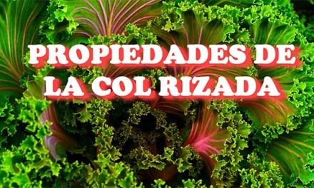 Propiedades de la Col Rizada o Kale o Berza ¿Una Súper Verdura?