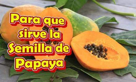 Para que sirve la Semilla de Papaya en ayunas, para los Parasitos, el higado, el Riñon