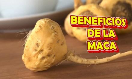 Los Beneficios de la MACA Peruana, el Energizante de los Incas