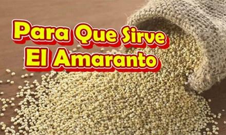 Para Que Sirve El Amaranto – Propiedades, Beneficios y Contraindicaciones Del Amaranto