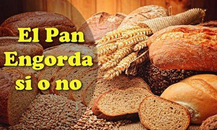 El Pan Engorda si o no, Mito o Realidad, diferencias con el Pan Integral