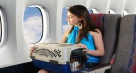 animais-em-viagens-aereas-canal-de-estimacao