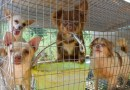 Resolução n.º 1.069 – saúde e bem-estar dos animais expostos em petshops