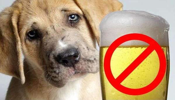 Evite aderir à moda de dar vinhos e cervejas para seus animais