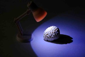 sistema refuerzo cerebro nuevo