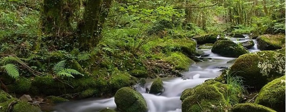 Agua tratada:Ahorro y Medio Ambient...