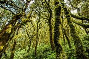 La ULL participa en un estudio que revela la extensión del impacto humano en los ecosistemas insulares del planeta