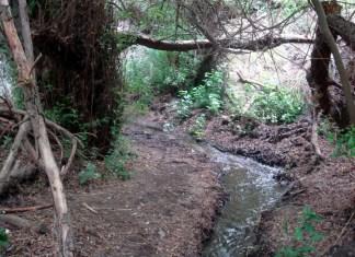 Barranco Cernícalos