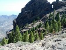 Pico de Las Nieves & Roque Nublo (3)