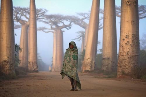 Nina Malagasy entre arboles baobab
