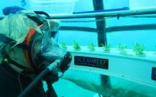 Jardin de Nemo (4)