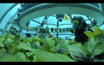 Jardin de Nemo (7)