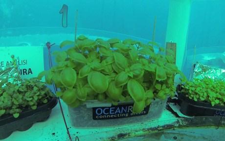 Jardin de Nemo (9)