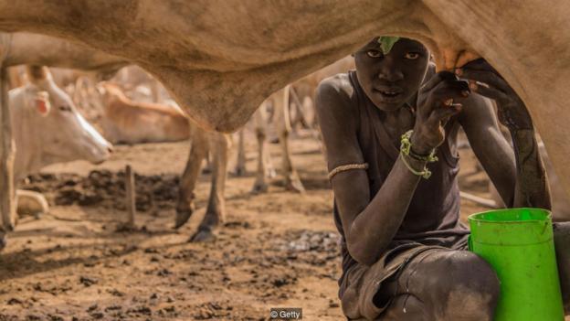 sudanes ordeñando vaca