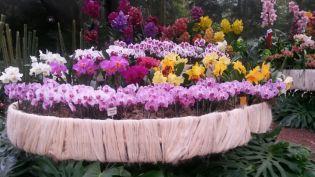 Orquideas feria flores medellin