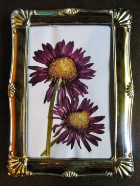 AA&V purple flower