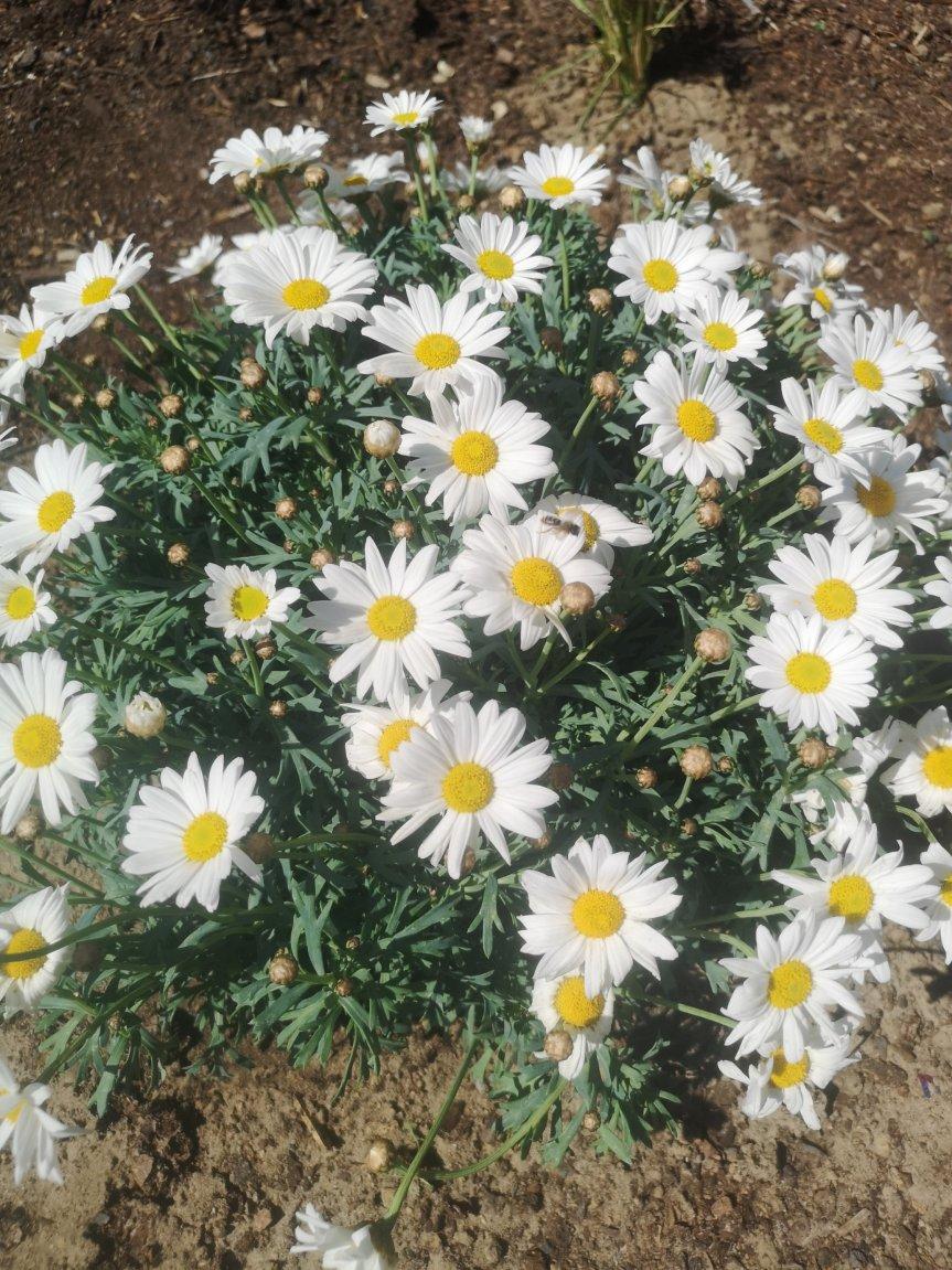 Vom Arztbesuch, der einem Kinofilm glich und einem Superschurken der unsere Pflanzen gestohlen hat