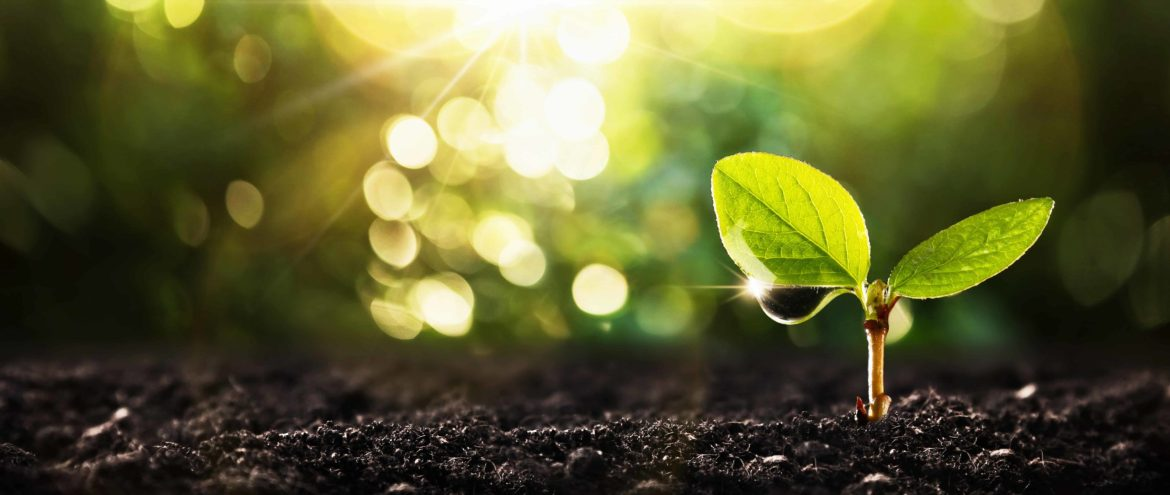 Seedling and soil serves as a metaphor for cancer