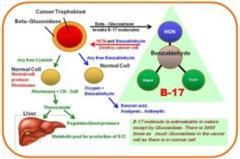 the tropholast theory of cancer
