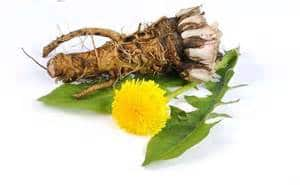 dandelion root for cancer