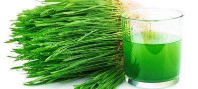 wheatgrass-juice