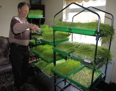 Danny McDonald heals stomach cancer by drinking wheatgrass juice