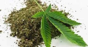 Cannabis Oil For Cancer Treatment