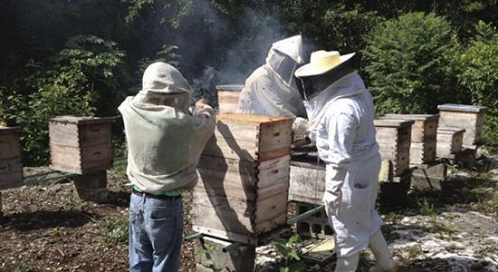industria mielera